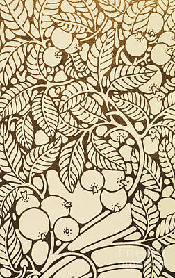Guava Tree Painting - Guava Graphic by Hawaiian Legacy Archive - Printscapes