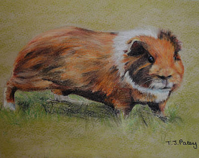 Guinea Pig Art Print by Tanya Patey