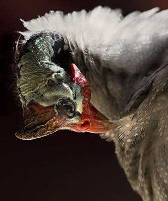 Guineafowl Photograph - Guineafowl by Basie Van Zyl