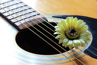 Photograph - Guitar And Daisy by Angela Murdock