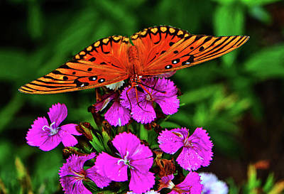 Photograph - Gulf Flittery Butterfly 007 by George Bostian