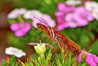 Photograph - Gulf Flittery Butterfly 008 by George Bostian