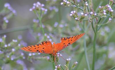 Photograph - Gulf Fritillary Butterfly And Wildflowers 2  by Warren Thompson