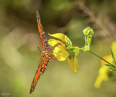 Photograph - Gulf Fritillary Butterfly by Philip Rispin