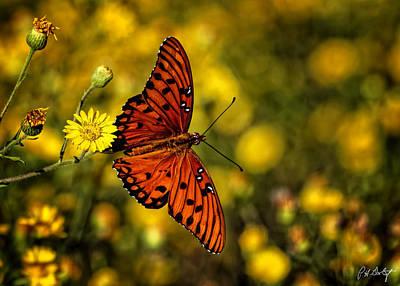 Gulf Fritillary Butterfly Original