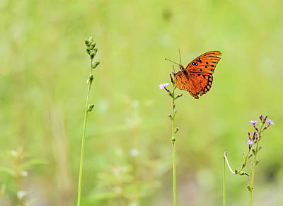 Mountain Landscape Rights Managed Images - Gulf Fritillary Royalty-Free Image by Gabrielle Harrison