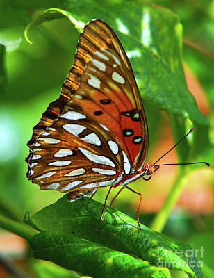 Photograph - Gulf Fritillary by Larry Nieland