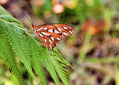 Photograph - Gulf Fritillary On Fern by Michael Ziegler