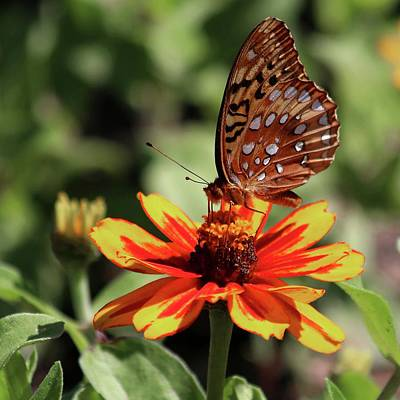 Photograph - Gulf Fritillary On Red And Yellow Flower by Carol Montoya