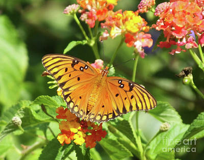 Photograph - Gulf  Fritillary Six by Lizi Beard-Ward
