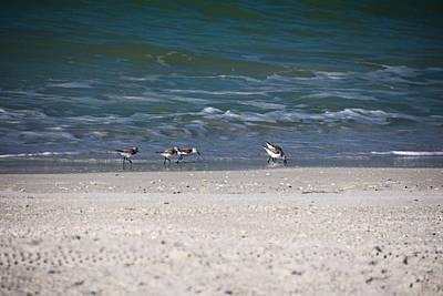 Photograph - Gulf Gathering by Michiale Schneider