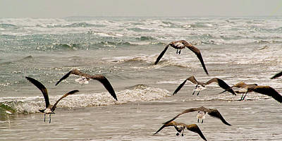 Photograph - Gulf Gulls by Michael Flood