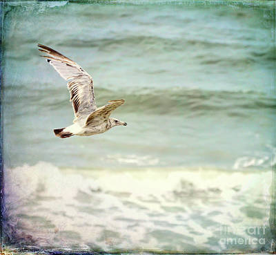 Summer Photograph - Gull Above The Waves by Kerri Farley