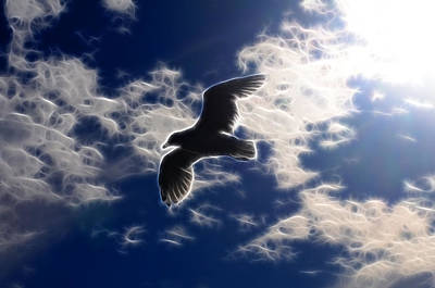 Photograph - Gull Against Sky Fractal by Lawrence Christopher