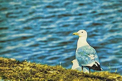 A Baikal Gull Art Print