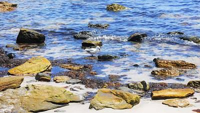 Photograph - Gull Along The Shore - Maria Island by Lexa Harpell