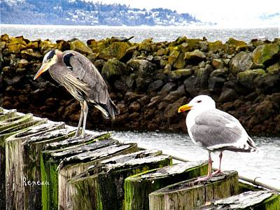 Photograph - Gull And Blue Heron by Sadie Reneau