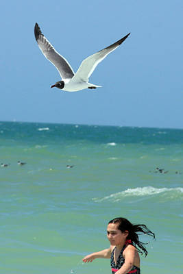 Gull And Girl Art Print