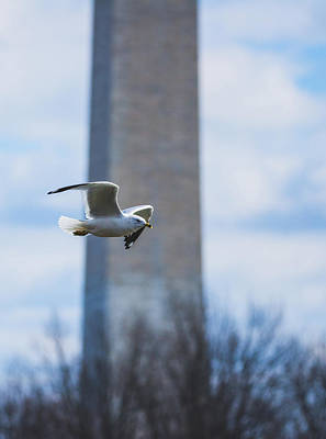 Photograph - Gull And Gw Memorial by Jeff at JSJ Photography