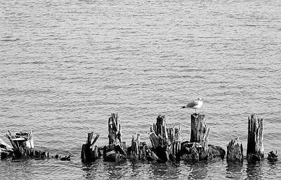 Photograph - Gull And Pilings Bw by Mary Bedy