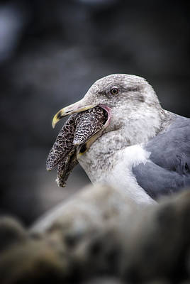 Photograph - Gull And Seastar by Robert Potts