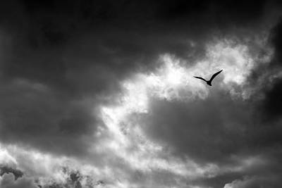 Photograph - Gull And Storm Clouds 1 Bw by Mary Bedy