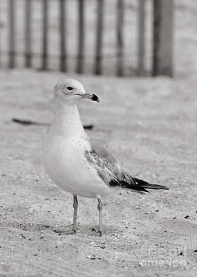 Beach Theme Decorating Photograph - Land Sea And Sky Series Gull by Angela Rath