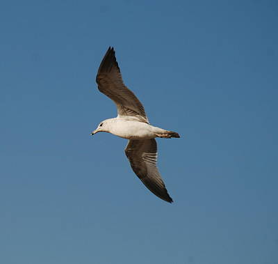 Photograph - Gull As Seen From The Beach by Richard Bryce and Family