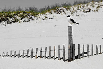 Photograph - Gull At Island Beach by Colleen Kammerer