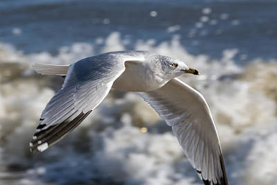 Photograph - Gull At The Beach by Liza Eckardt