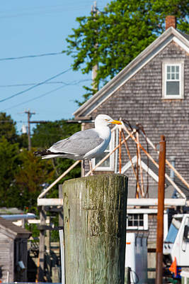Photograph - Gull At The Harbor by Allan Morrison