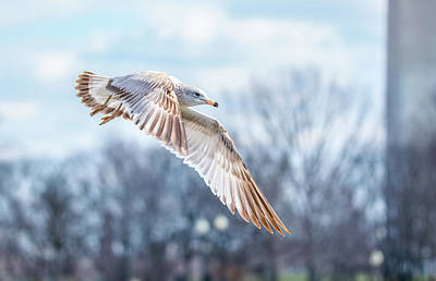 Photograph - Gull At The Mall by Jeff at JSJ Photography