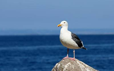 Photograph - Gull At The Sea  by Christy Pooschke