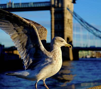 Photograph - Gull At Tower Bridge by Judi Saunders