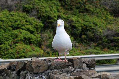Photograph - Gull  by Christy Pooschke