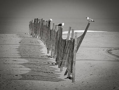 Gull Fence Art Print by Andy Smetzer