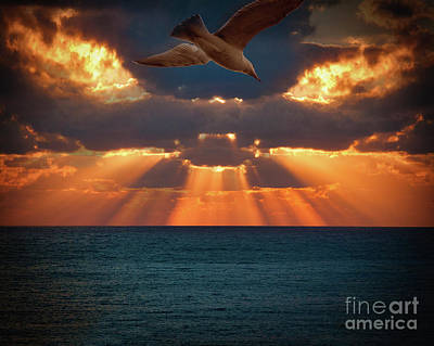 Photograph - Gull Flight 583 by Edmund Nagele