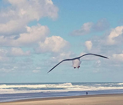Photograph - Gull Getaway by Suzy Piatt