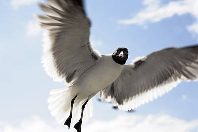 Photograph - Gull In Flight by Marilyn Hunt