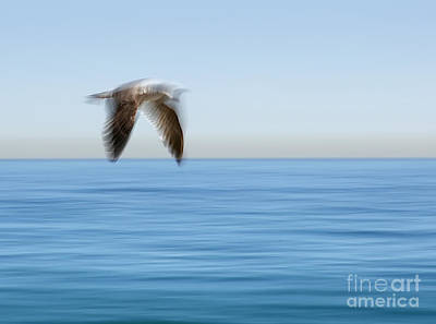 Photograph - Gull In Flight Wing Motion Blur Photo by Clare VanderVeen