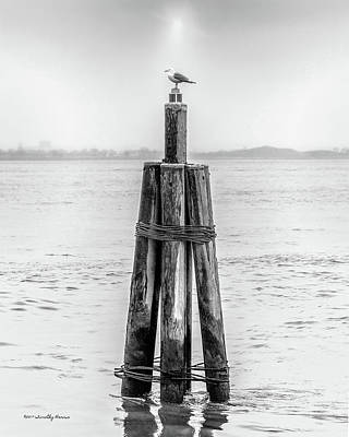 Photograph - Gull In New York Harbor by Timothy Harris