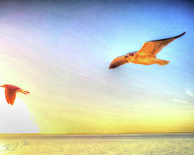Digital Art - Gull In Sky by Kathleen Illes