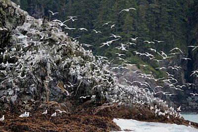 Photograph - Gull Island by Trent Mallett