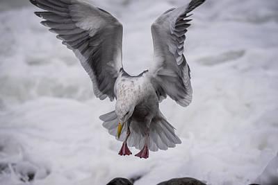 Photograph - Gull Landing by Robert Potts
