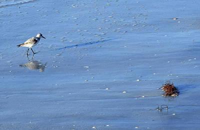 Photograph - Gull by Larah McElroy