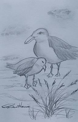 Ocean Sunset Drawing - Gull Mom And Chick by Carlene Harris