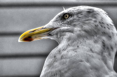 Photograph - Gull Mug Shot by Richard Ortolano