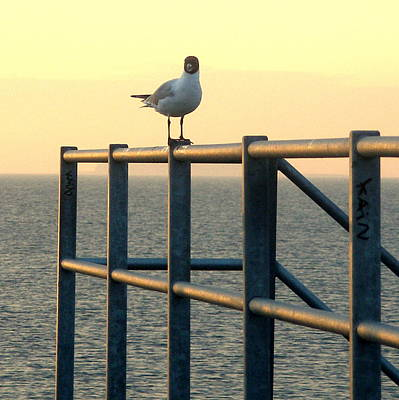 Gull On A Rail Art Print by Michael Canning