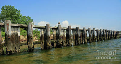 Photograph - Gull On Dock Pilings I by Mary Haber