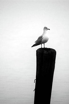 Photograph - Gull On Post  by Mary Bedy